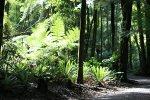 Kaimi Range walking track New Zealand