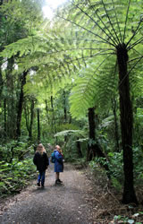 Maungatautari Tree Fern and hiking track in New Zealand