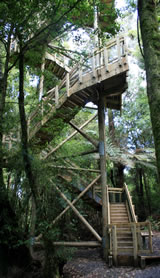 Viewing Tower, Maungatautari Mountain, New Zealand