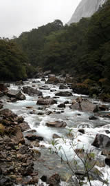 Fiordland National Park River