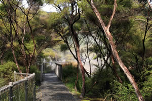 The Hot Springs Bush Walk