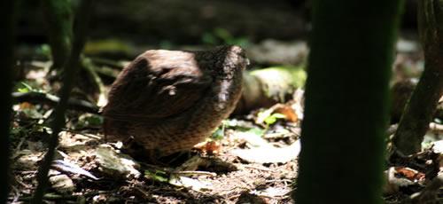 Otorohanga Kiwi House Native Bird