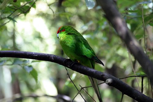 Native Bird Park