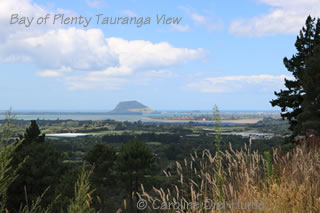 Bay of Plenty Landscape View with Mt Maunganui in the distance