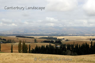 Canterbury Landscape View - Canterbury Plains Mountains