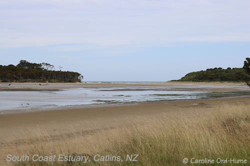 An Estuary in the Catlins Coast Landscape, New Zealand