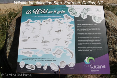 Wildlife Identification Board at Fortrose in the Catlins NZ