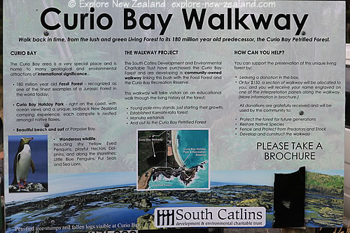 Curio Bay Walkway Project, Petrified Forest and Wildlife Penguins in the Catlins, South Island New Zealand