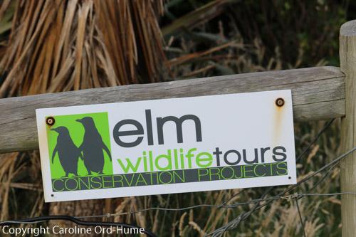 Elm Wildlife Tours Sign at Penguin Conservation Project, nr Dunedin, Otago Peninsula, Dunedin, South Island, New Zealand