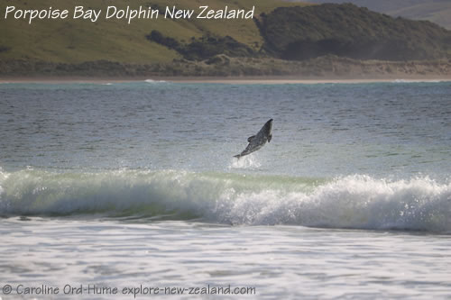 Porpoise Bay Habitat for Hector's Dolphins to Live and Breed on the Coast of the South Island New Zealand