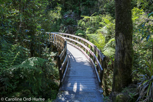 Hokitika Gorge Walk Wooden Bridge, West Coast, New Zealand