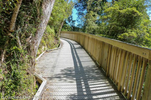 Hokitika Gorge Boardwalk next to Hokitika River, walk in New Zealand Native Bush on West Coast, South Island