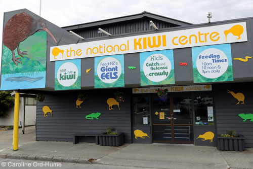 The National Kiwi Centre, Hokitika, West Coast, South Island, New Zealand