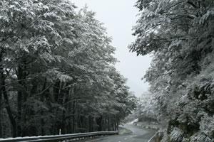 Lewis Pass Snow November New Zealand Winter - Photographer Daniella