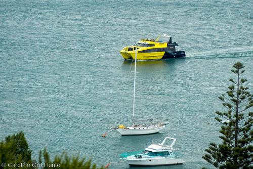 Northland Paihia Dolphin Cruise Tour