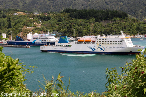Bluebridge Ferry and Interislander Ferry in Picton Harbour Dock, Queen Charlotte Sound, Marlborough, New Zealand