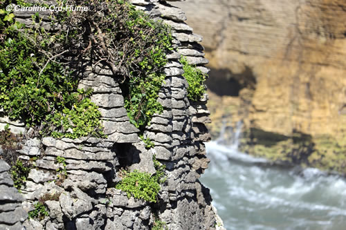 Pancake Rocks stack with native plants growing on it at Dolomite Point, Punakaiki, West Coast, South Island, New Zealand