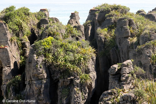 Stacks of Limestone Pancake Rocks with Native New Zealand flora growing on them at Dolomite Point, Punakaiki, in the Paparoa National Park, New Zealand