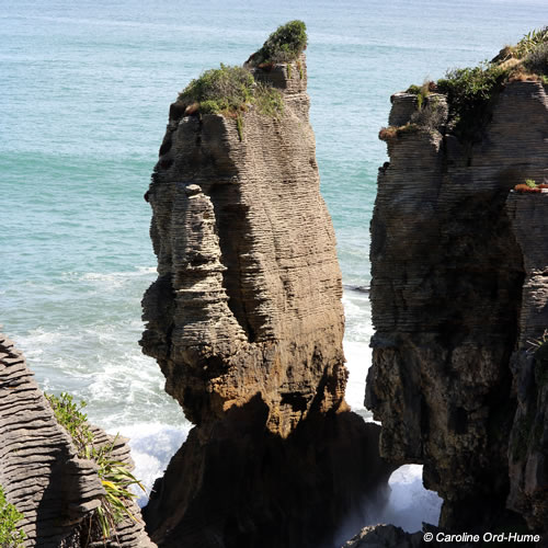 Sea Erroded Limestone Pancake Rocks stack with native flora growing on the rocks at Dolomite Point, Punakaiki, West Coast, New Zealand