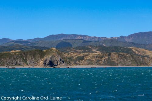 Wellington East Harbour Regional Park Coast, Wellington Harbour Ferry Trip, North Island New Zealand