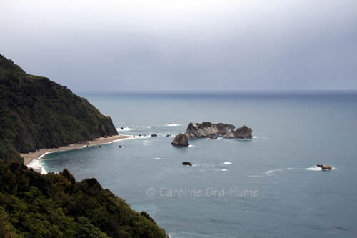 West Coast - Westland National Park