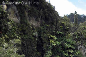 Whanganui National Park Gorge and Bush