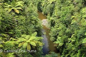 Whanganui National Park River