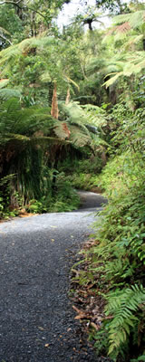 Maintained track, North Island, New Zealand