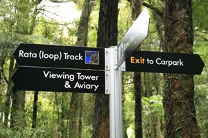 Rate Loop Track Maungatautari Mountain New Zealand