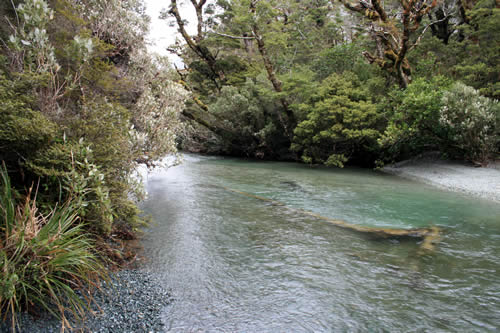 Fiordland National Park River, New Zealand