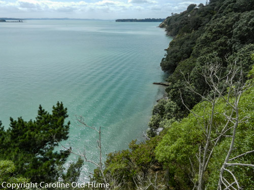 Auckland Coast View with Native Bush New Zealand