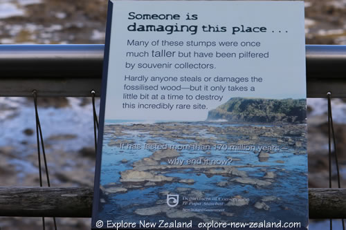 Curio Bay Fossilised Forest Preservation Sign, the Catlins, South Island NZ