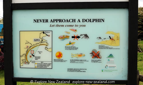 Porpoise Bay Hector's Dolphin Care Information Board... Never approach a Dolphin. Let them come to you... Wildlife care in New Zealand