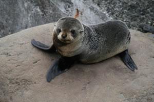 Seal New Zealand Sealife