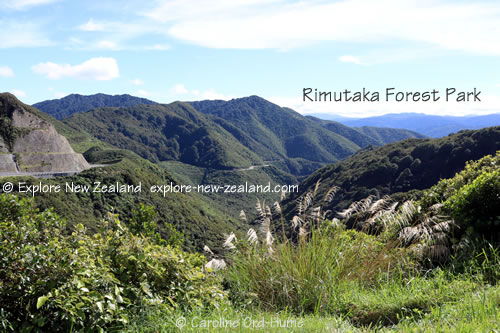Rimutaka Forest Park - Wellington Wairarapa Region