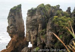 West Coat Landforms Near Pancake Rocks Paparoa National Park