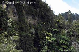 Whanganui National Park Gorge and Bush