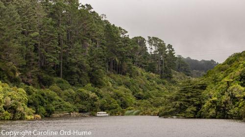 Native Bush, Karori Resevoir and Electric Boat at Zealandia - Te Mara a Tane New Zealand