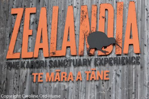 Zealandia The Karori Sanctuary Experience - Te Mara a Tane, Wellington urban ecosanctuary, New Zealand